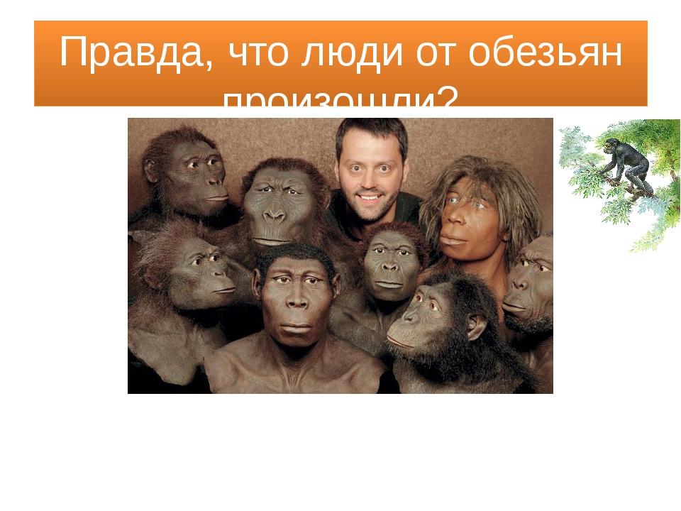 Правда, что люди от обезьян произошли?