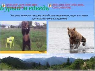 Хищное млекопитающее семейства медвежьих; один из самых крупных наземных хищ