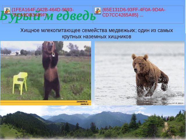 Хищное млекопитающее семейства медвежьих; один из самых крупных наземных хищ...