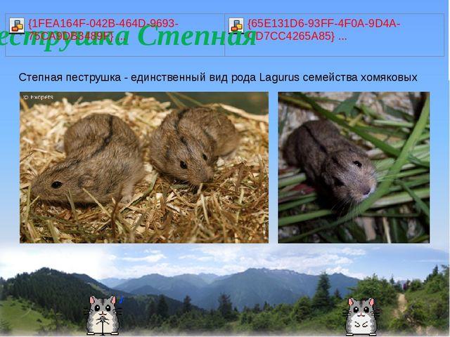 Степная пеструшка - единственный вид рода Lagurus семейства хомяковых