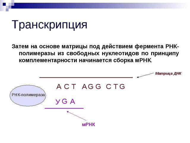 Транскрипция Затем на основе матрицы под действием фермента РНК-полимеразы из...