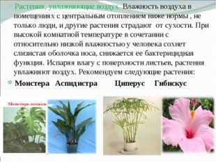 Растения, увлажняющие воздух. Влажность воздуха в помещениях с центральным от