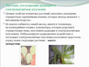 Растения, поглощающие радиацию и электромагнитные излучения. Ценные свойства