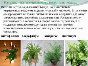 Растения, поглощающие вредные вещества из воздуха. Растения не только увлажня