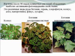 Изучены около 90 видов комнатных растений обладающих наиболее активными фитон