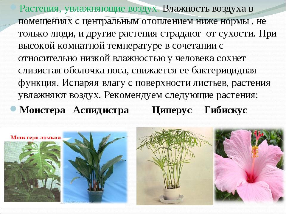 Растения, увлажняющие воздух. Влажность воздуха в помещениях с центральным от...
