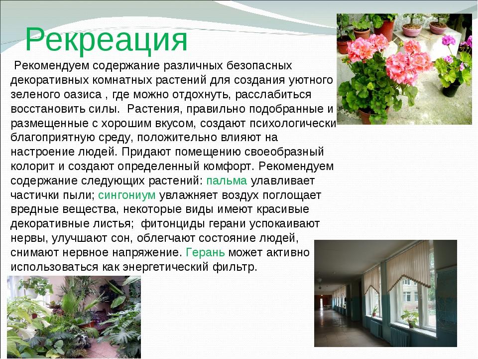 Рекреация Рекомендуем содержание различных безопасных декоративных комнатных...