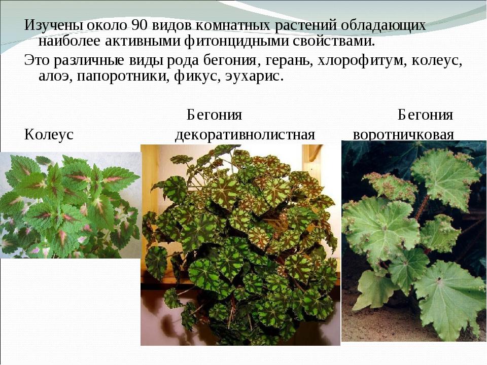 Изучены около 90 видов комнатных растений обладающих наиболее активными фитон...