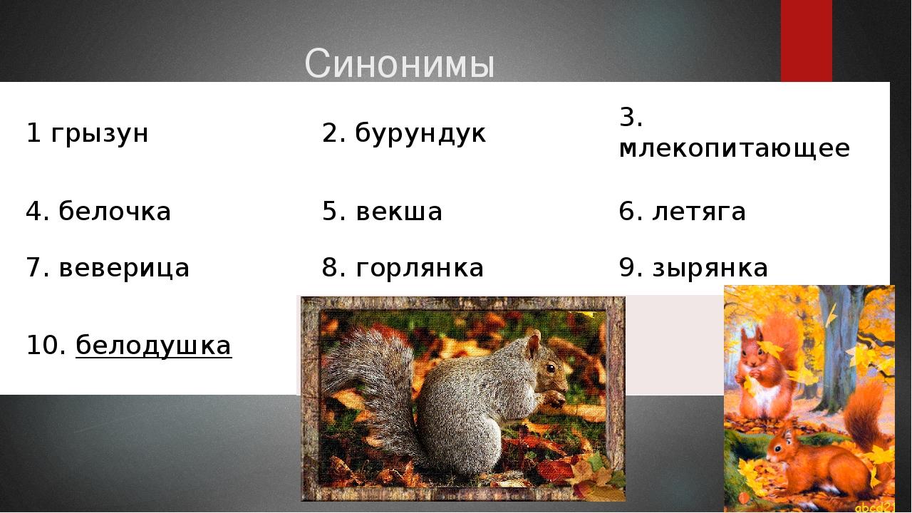 Синонимы 1грызун 2.бурундук 3.млекопитающее 4.белочка 5.векша 6.летяга...