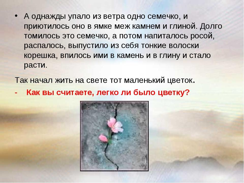 А однажды упало из ветра одно семечко, и приютилось оно в ямке меж камнем и г...