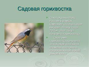 Садовая горихвостка Cоюз охраны птиц России в рамках кампании «Птица года» вы