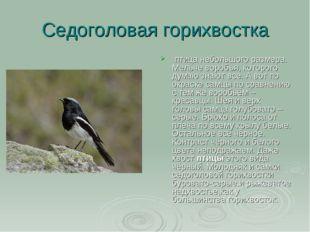 Седоголовая горихвостка птица небольшого размера. Мельче воробья,которого д