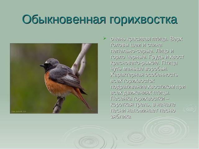 Обыкновенная горихвостка очень красивая птица. Верх головы шеи и спина пепель...