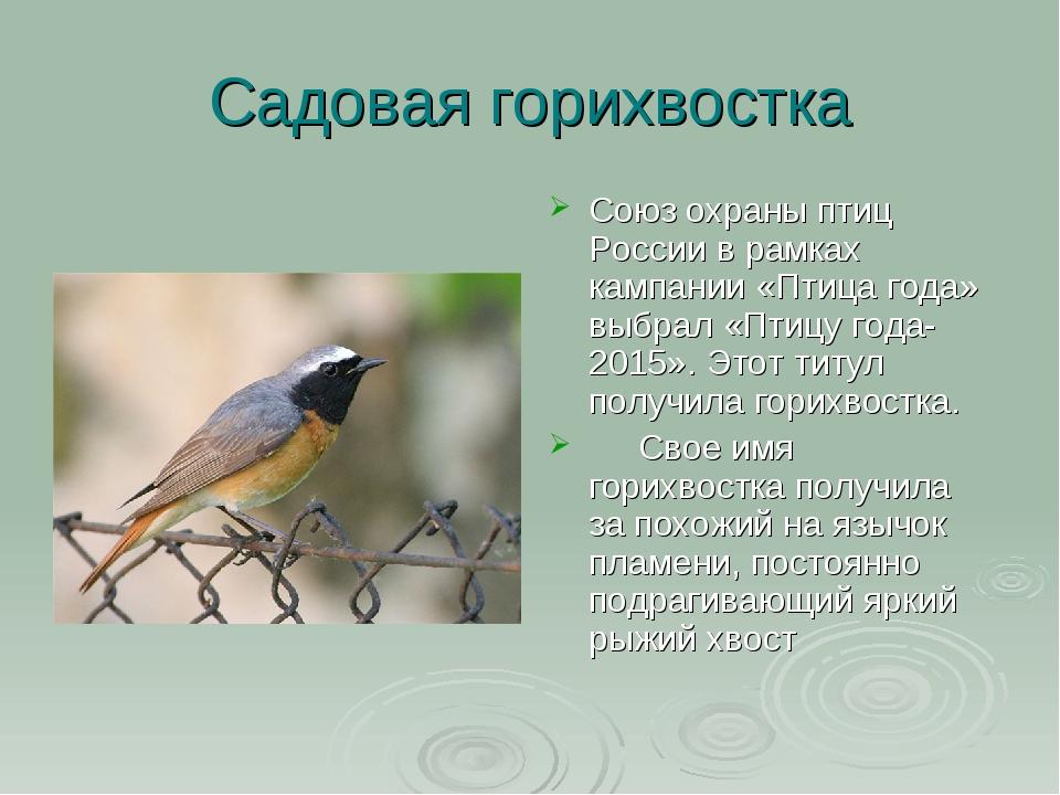 Садовая горихвостка Cоюз охраны птиц России в рамках кампании «Птица года» вы...