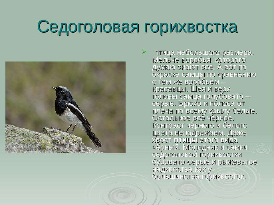 Седоголовая горихвостка птица небольшого размера. Мельче воробья,которого д...