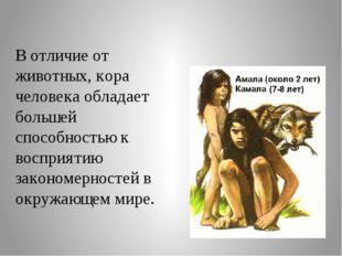 В отличие от животных, кора человека обладает большей способностью к восприят
