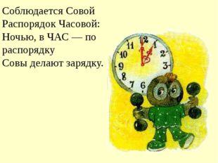 Соблюдается Совой Распорядок Часовой: Ночью, в ЧАС — по распорядку Совы де