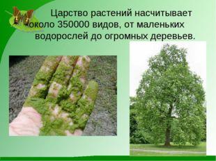 Царство растений насчитывает около 350000 видов, от маленьких водорослей д
