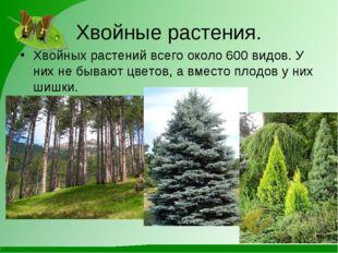 Хвойные растения. Хвойных растений всего около 600 видов. У них не бывают цве