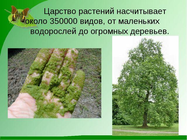 Царство растений насчитывает около 350000 видов, от маленьких водорослей д...