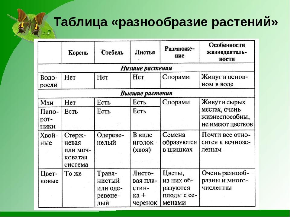 Таблица «разнообразие растений»