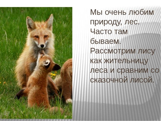 Мы очень любим природу, лес. Часто там бываем. Рассмотрим лису как жительницу...