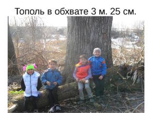 Тополь в обхвате 3 м. 25 см.