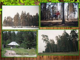 Парк зимой На качелях В тени вековых сосен Величавые сосны