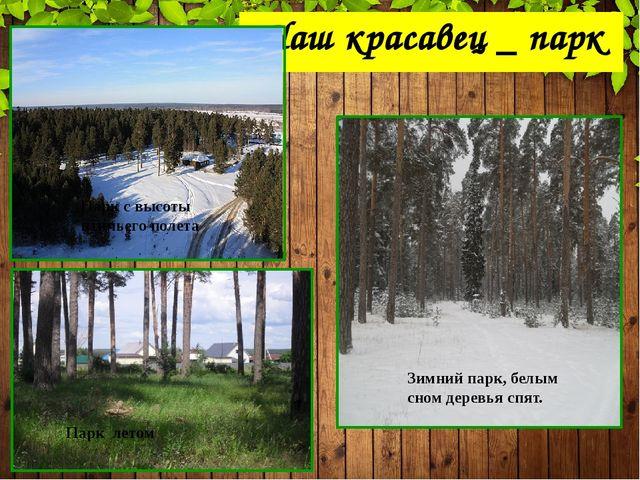 Наш красавец _ парк Парк с высоты птичьего полета Зимний парк, белым сном дер...