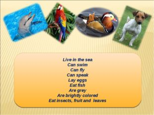 Live in the sea Can swim Can fly Can speak Lay eggs Eat fish Are grey Are bri
