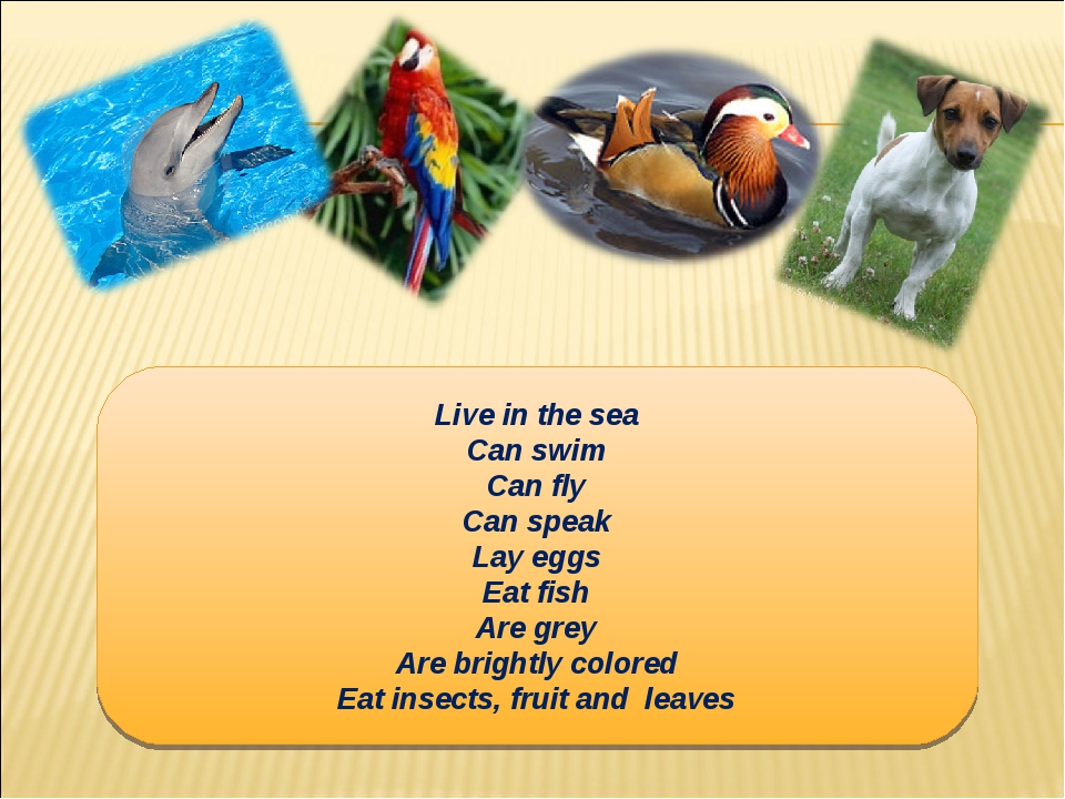 Live in the sea Can swim Can fly Can speak Lay eggs Eat fish Are grey Are bri...