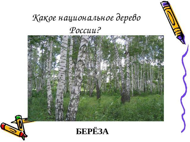 Какое национальное дерево России? БЕРЁЗА