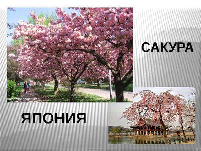 ЯПОНИЯ САКУРА