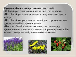 Правила сборки лекарственных растений: -Собирай растения только в тех местах,