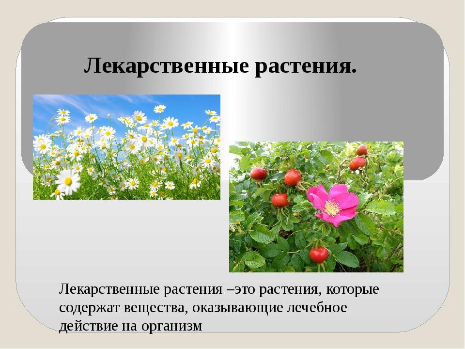 Лекарственные растения. Лекарственные растения –это растения, которые содержа...