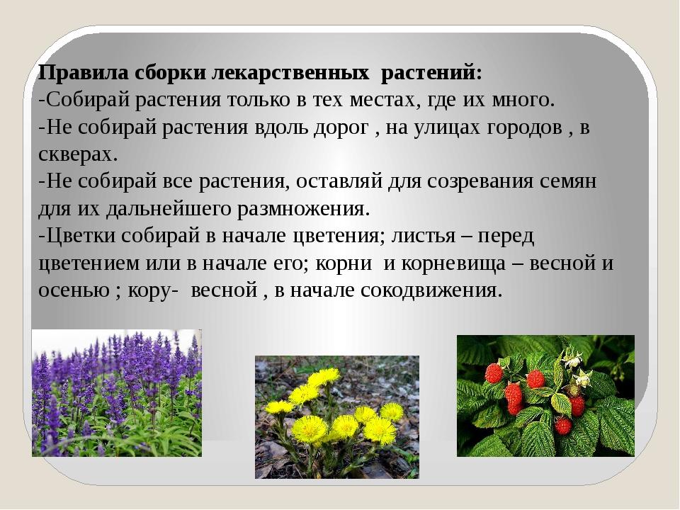 Правила сборки лекарственных растений: -Собирай растения только в тех местах,...