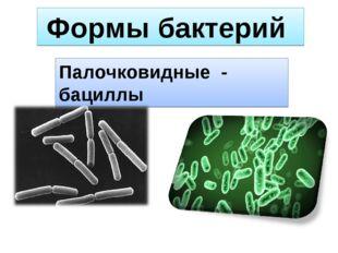Формы бактерий Палочковидные - бациллы
