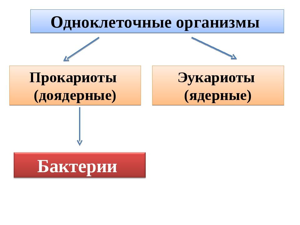 Одноклеточные организмы Прокариоты (доядерные) Эукариоты (ядерные)