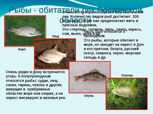 Очень богат и разнообразен мир обитателей рек. Количество видов рыб достигае...