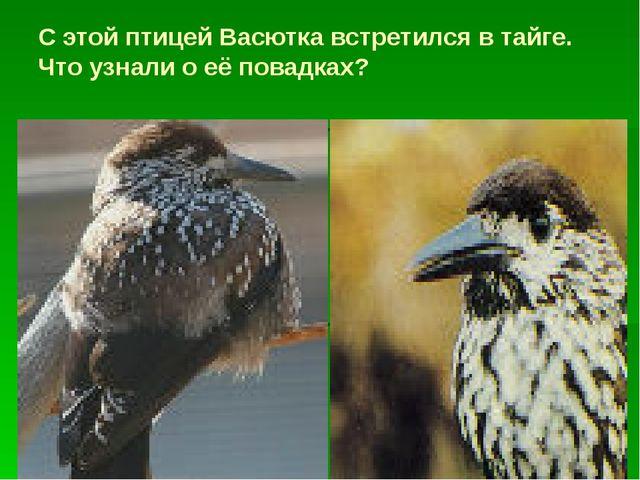 С этой птицей Васютка встретился в тайге. Что узнали о её повадках?
