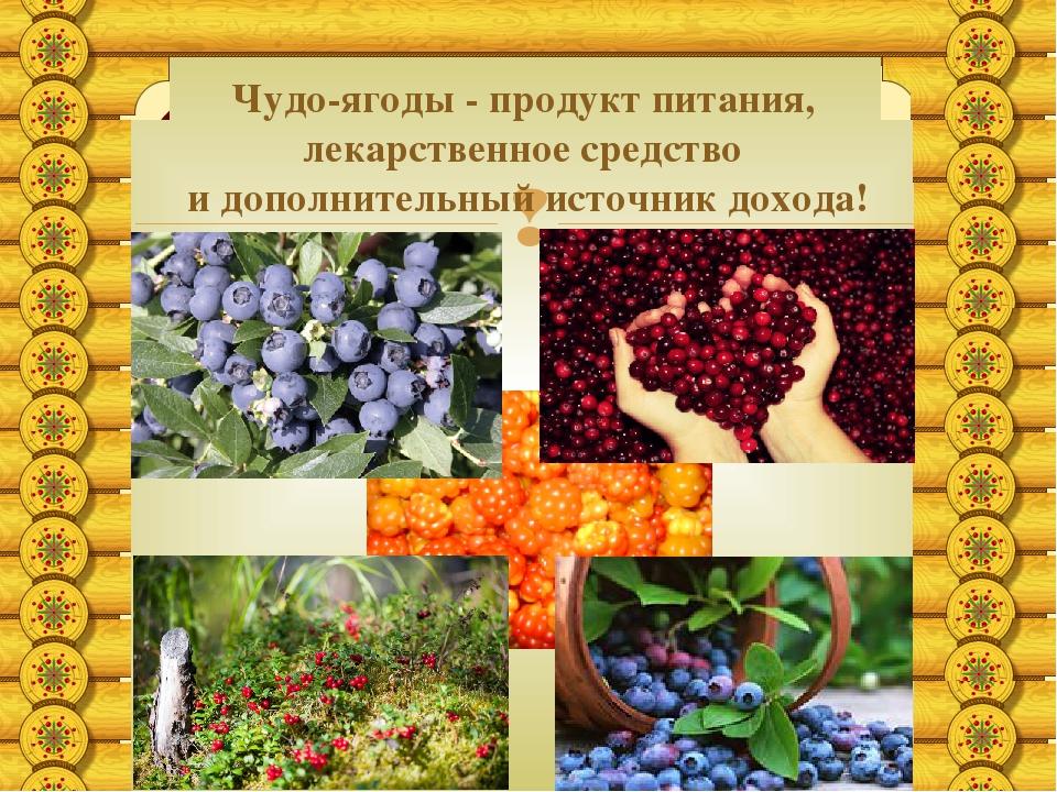Чудо-ягоды - продукт питания, лекарственное средство и дополнительный источн...