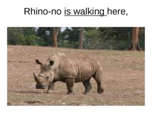 Rhino-no is walking here,