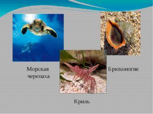 Морская черепаха Криль Брюхоногие