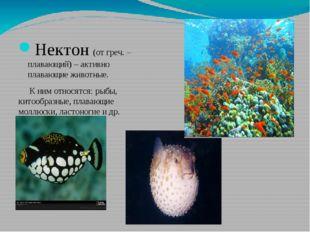 Нектон (от греч. – плавающий) – активно плавающие животные. К ним относятся: