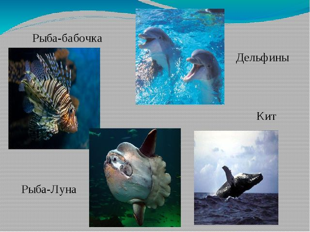 Дельфины Кит Рыба-бабочка Рыба-Луна