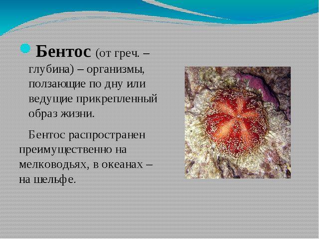 Бентос (от греч. – глубина) – организмы, ползающие по дну или ведущие прикре...