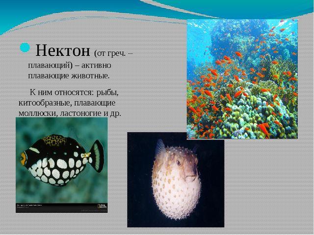 Нектон (от греч. – плавающий) – активно плавающие животные. К ним относятся:...