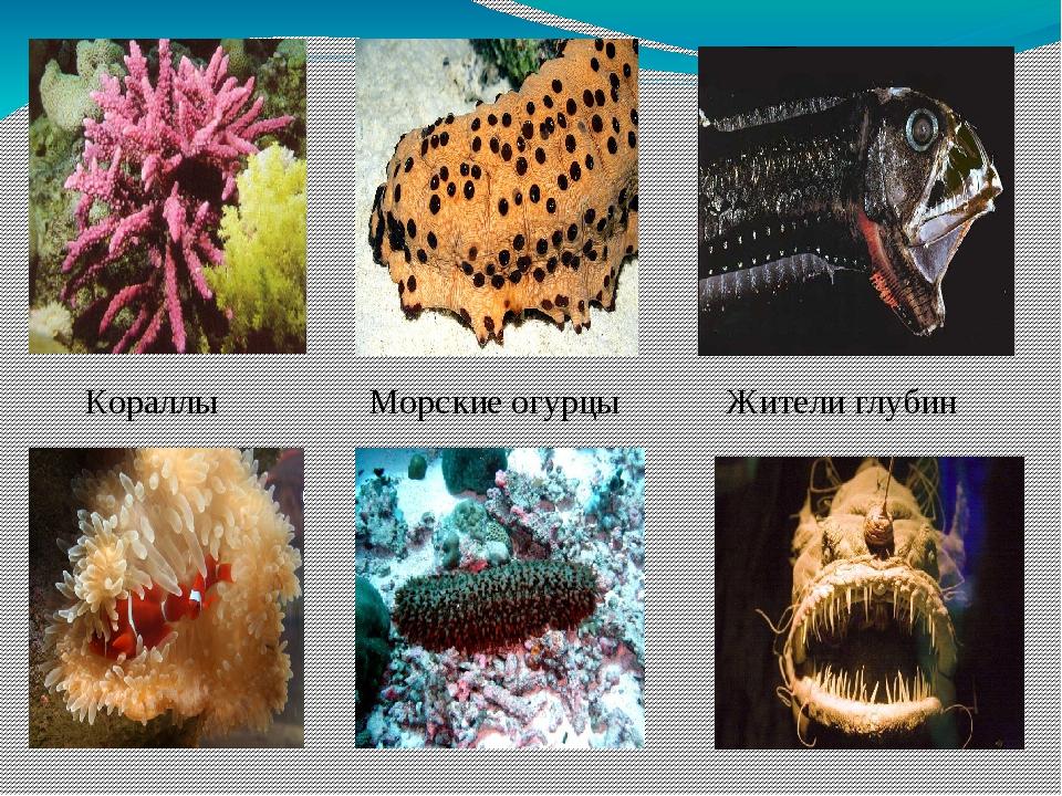 Кораллы Морские огурцы Жители глубин