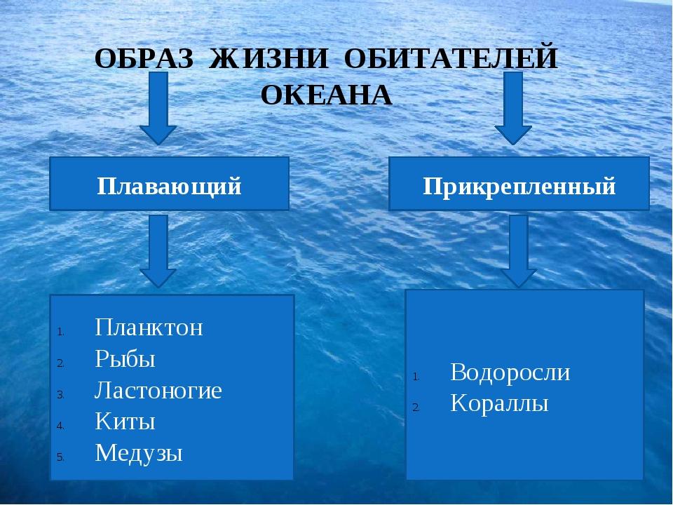 ОБРАЗ ЖИЗНИ ОБИТАТЕЛЕЙ ОКЕАНА Плавающий Прикрепленный Планктон Рыбы Ластоног...