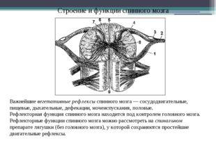 Строение и функции спинного мозга Важнейшие вегетативные рефлексы спинного мо